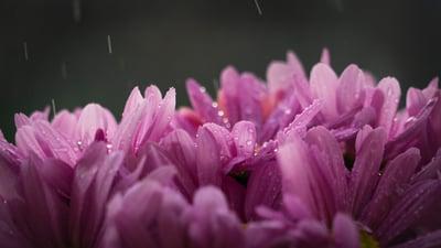blossom-flora-flowers