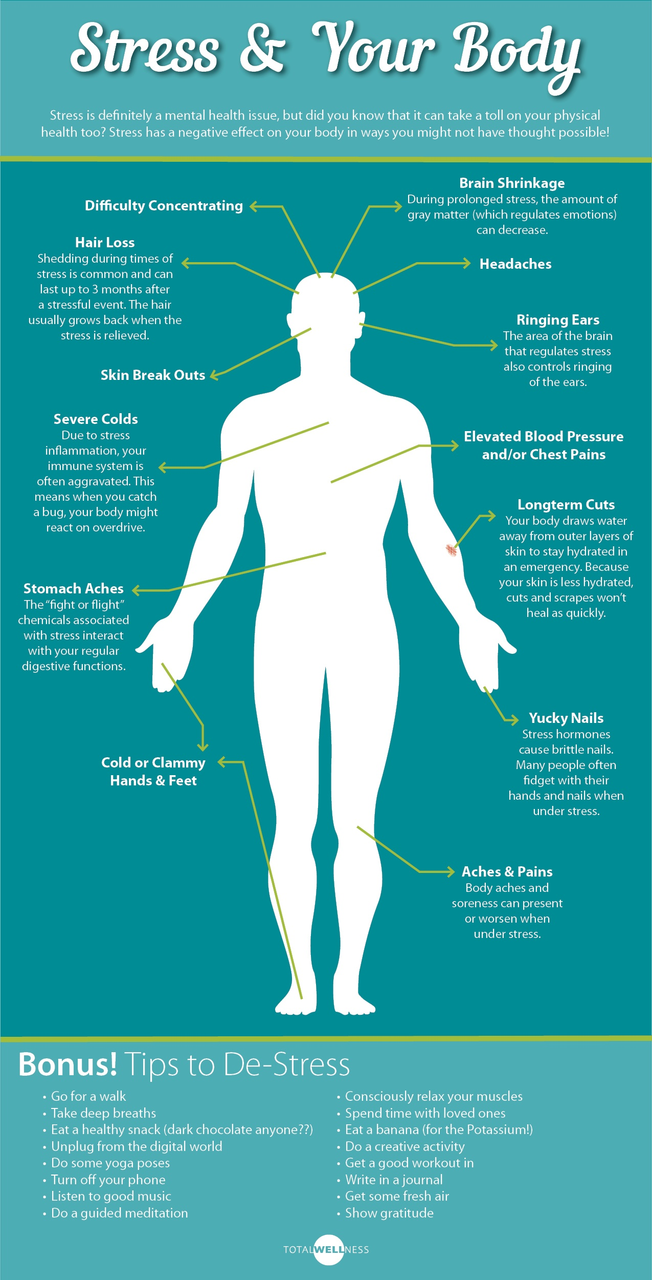 Stress, Your Body and Your Wellness Program